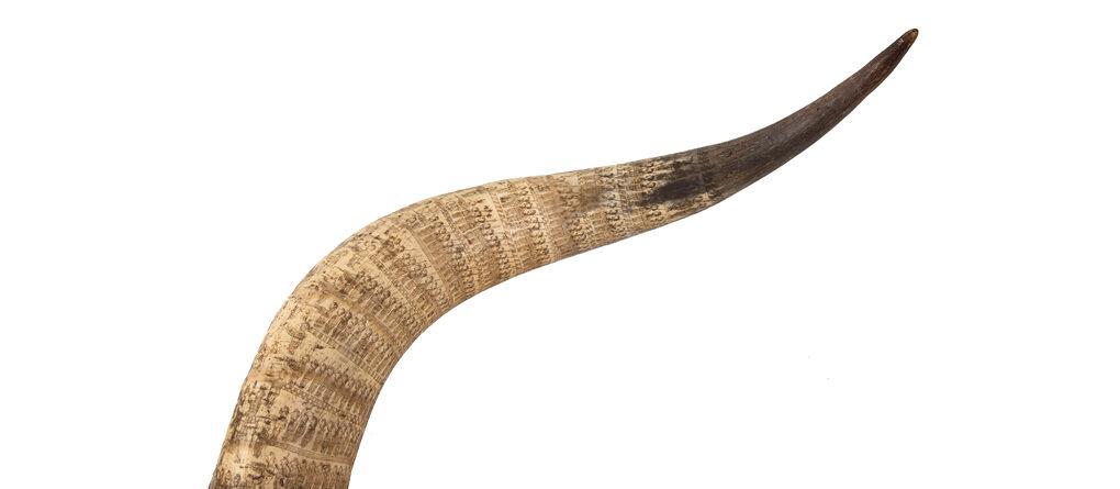 Engraved Cattle Horn